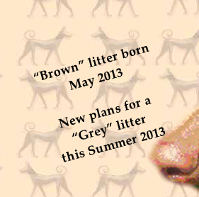 """Brown"" litter born May 2013