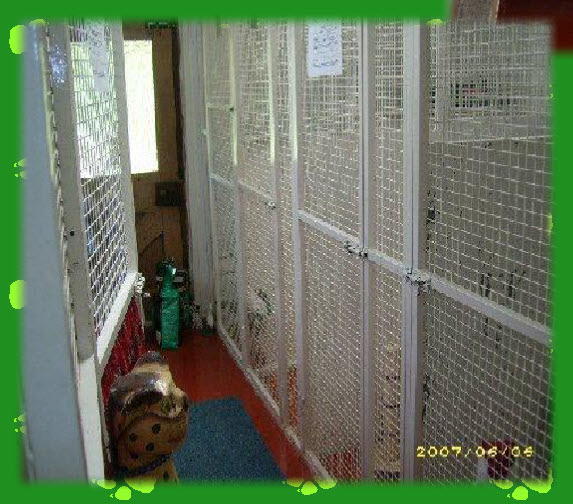 Cattery in Welshpool