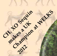 CH. XO Sequin makes a UK Champion at WELKS 2012