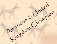 American & United Kingdom Champion